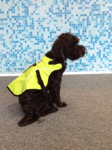 Pet Ambassador Memphis sporting a Ruff Wear High Visibility Track Jacket
